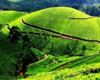 Image for Darjeeling - Kalimpong - Gangtok Tour