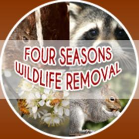Image for Four Seasons Wildlife Removal - Raccoon Removal Oshawa