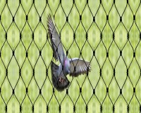 Image for Top Bird Net Installation in Ahmedabad