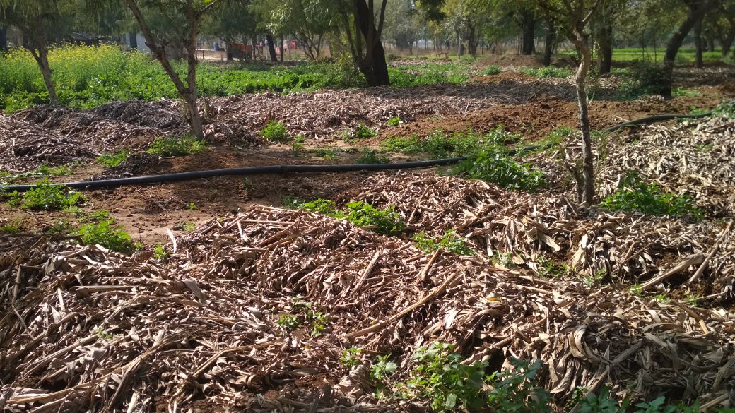 Organic manure for sale