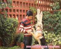 Image for Best Dog Trainer in South Delhi